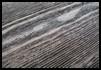 Decap� Ara�ado sobre Madera de Pino Tintada